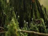 Ukázky na téma fotokomiks a loutky v přírodě_3